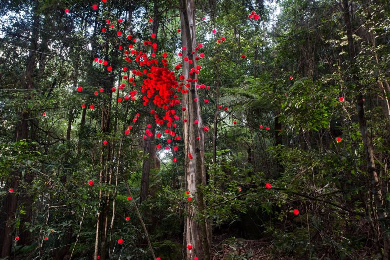 Australia's only sculpture exhibition held in an Australian rainforest