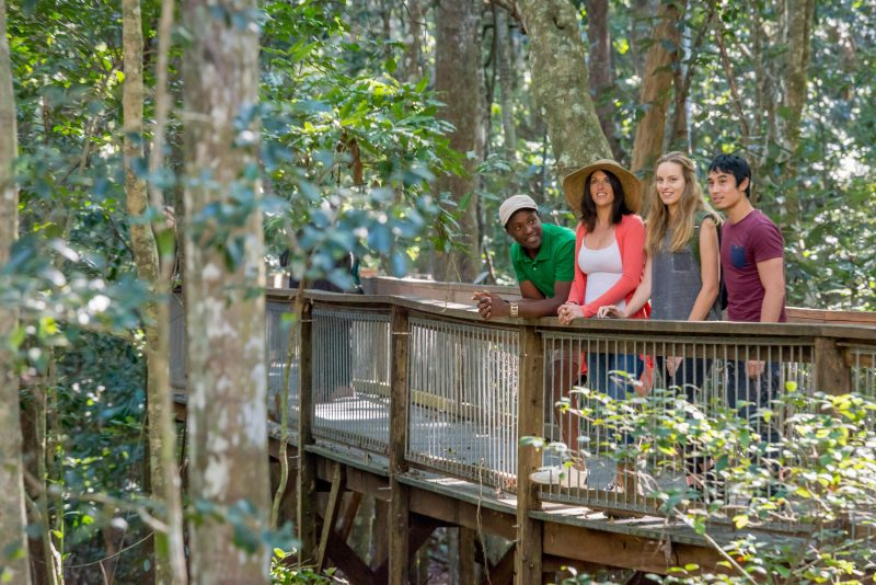 The boardwalk is a 1.3km raised accessible walk through the Rainforest