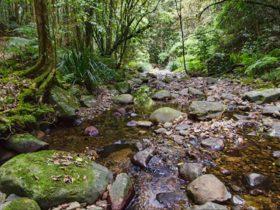 Sharpes Creek walking track