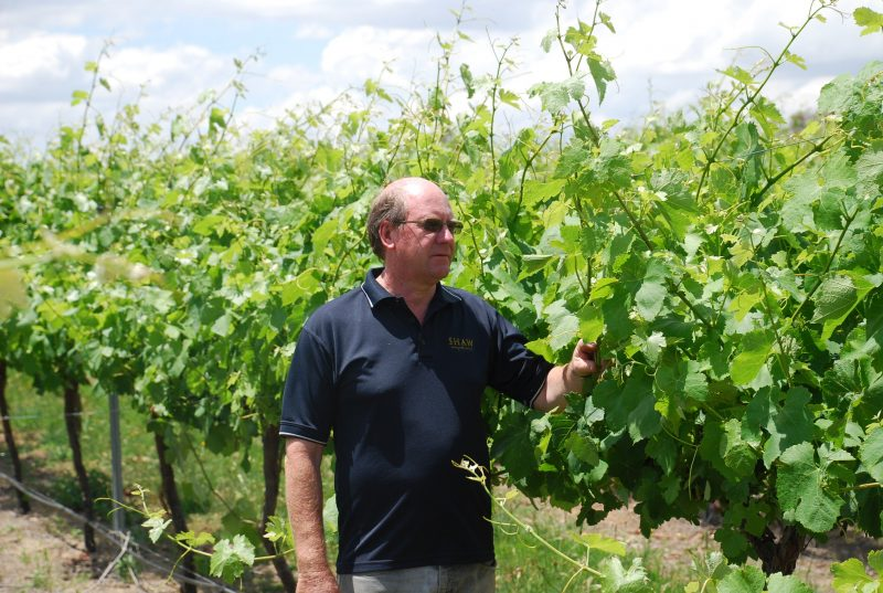 Graeme Shaw in the Shaw Wines vineyard