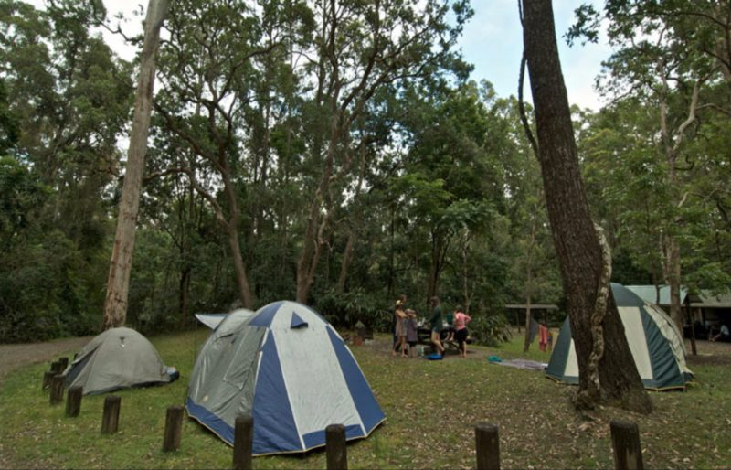 Sheepstation Creek campground, Border Ranges National Park. Photo: John Spencer