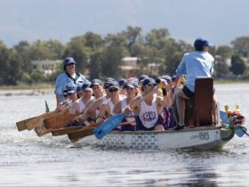 Dragon Boat Challenge at the Shellharbour City Festival of Sport