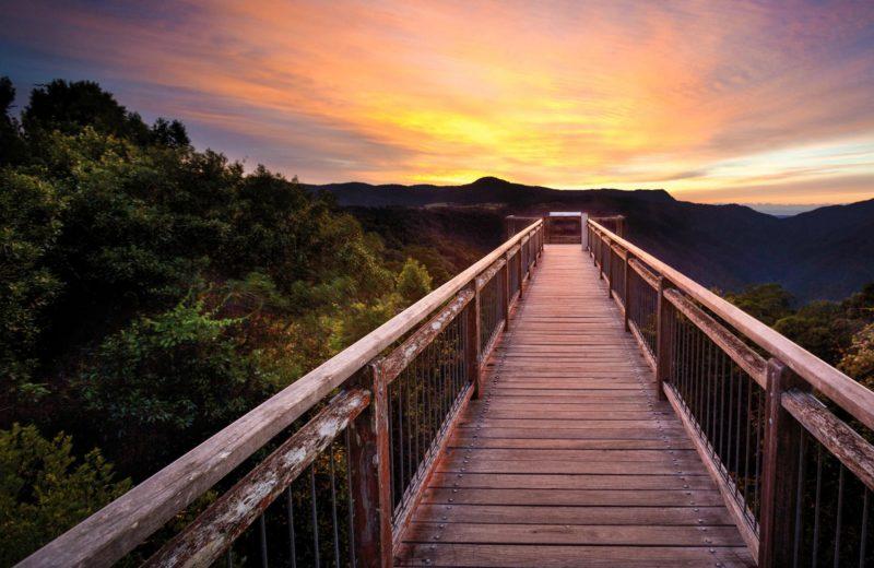 Skywalk lookout, Dorrigo National Park. Photo: Rob Cleary