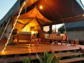 Glamping - Luxury Safari Tent Accommodation