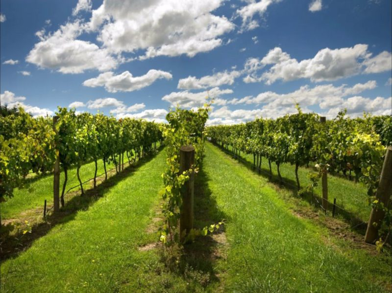 Southern Highland Wines