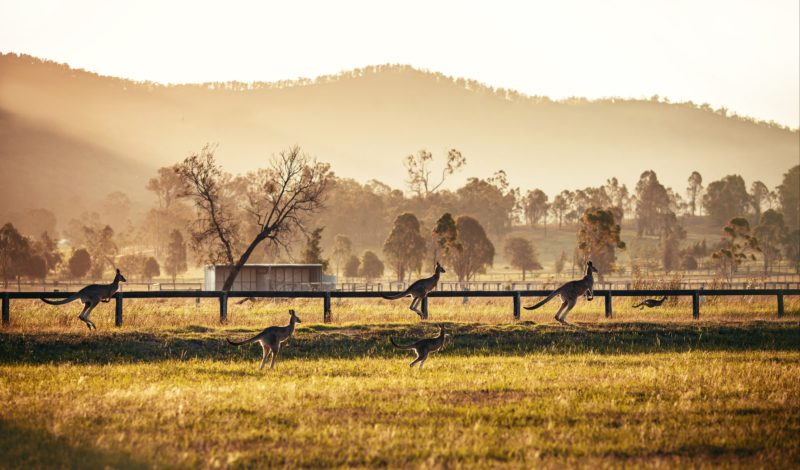 Hunter Valley at dusk