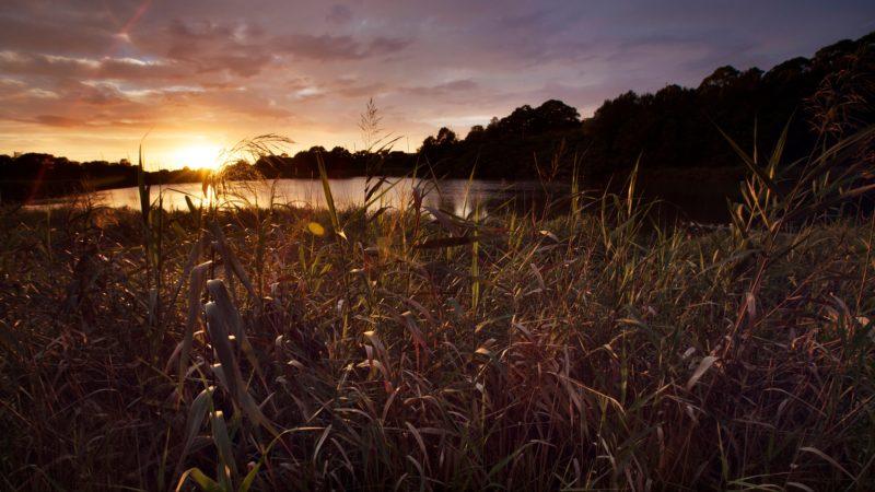 Spring Creek Wetland