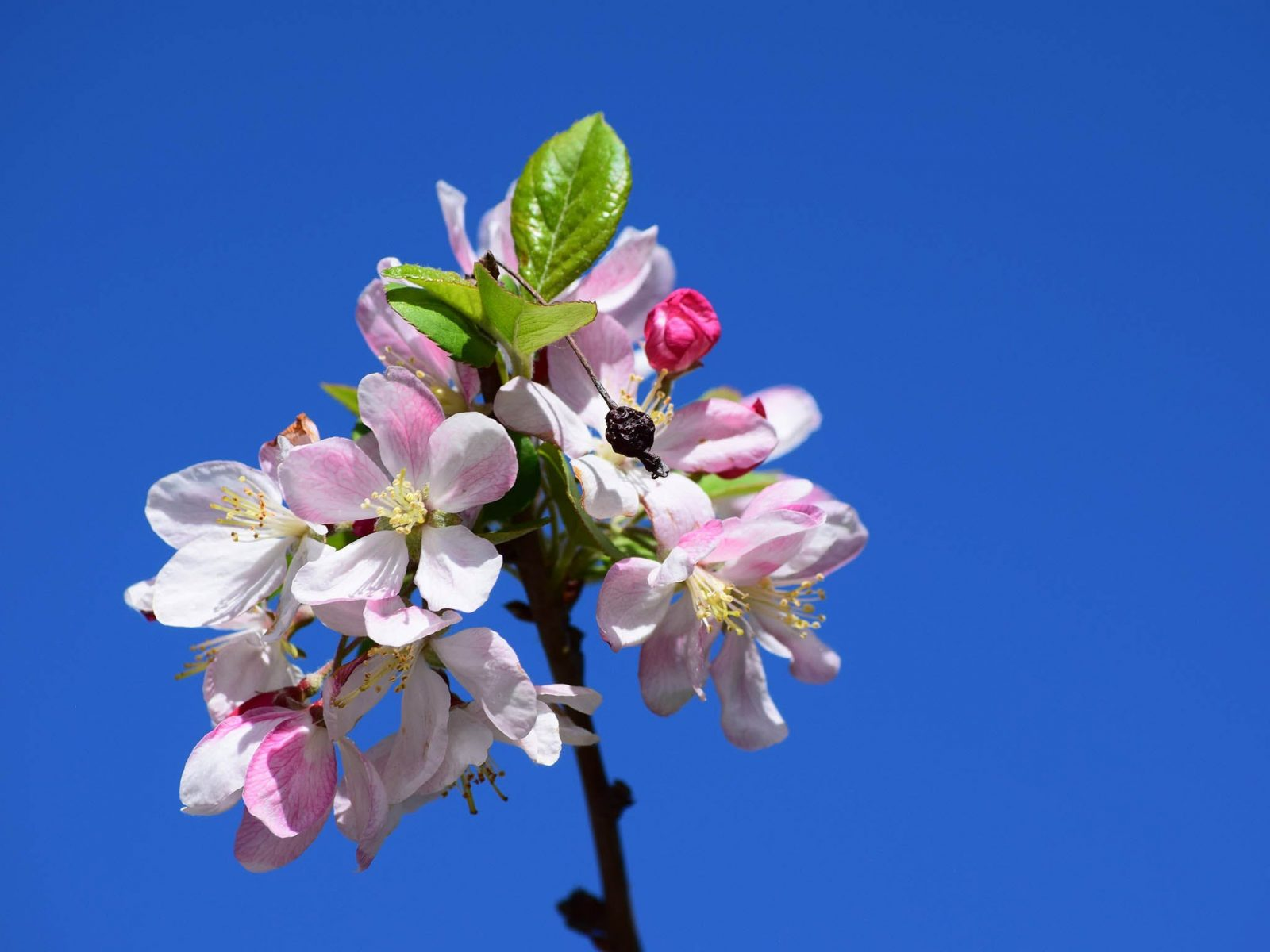 Spring Time at Hunter Valley Gardens