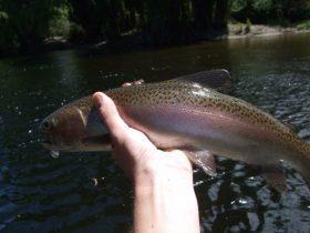 Steve Williamsons Trout Fishing Adventures
