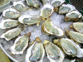 Stones Oysters Seafood