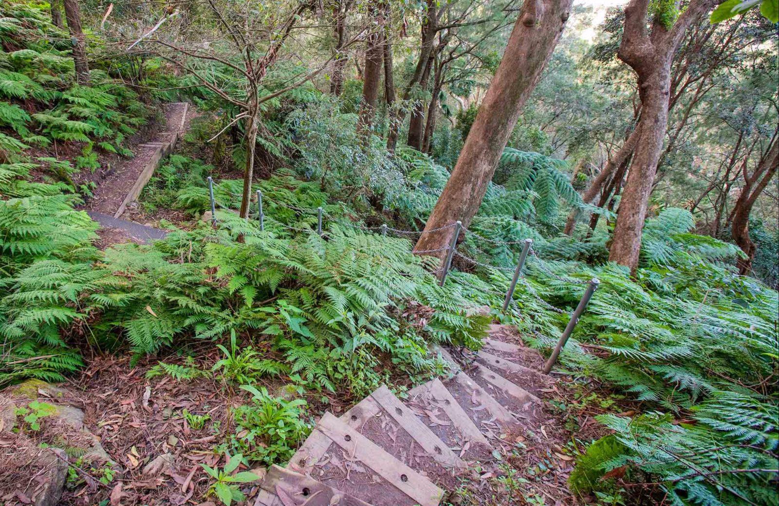 Sublime Point walking track, Illawarra Escarpment State Conservation Area. Photo: Nick Cubbin