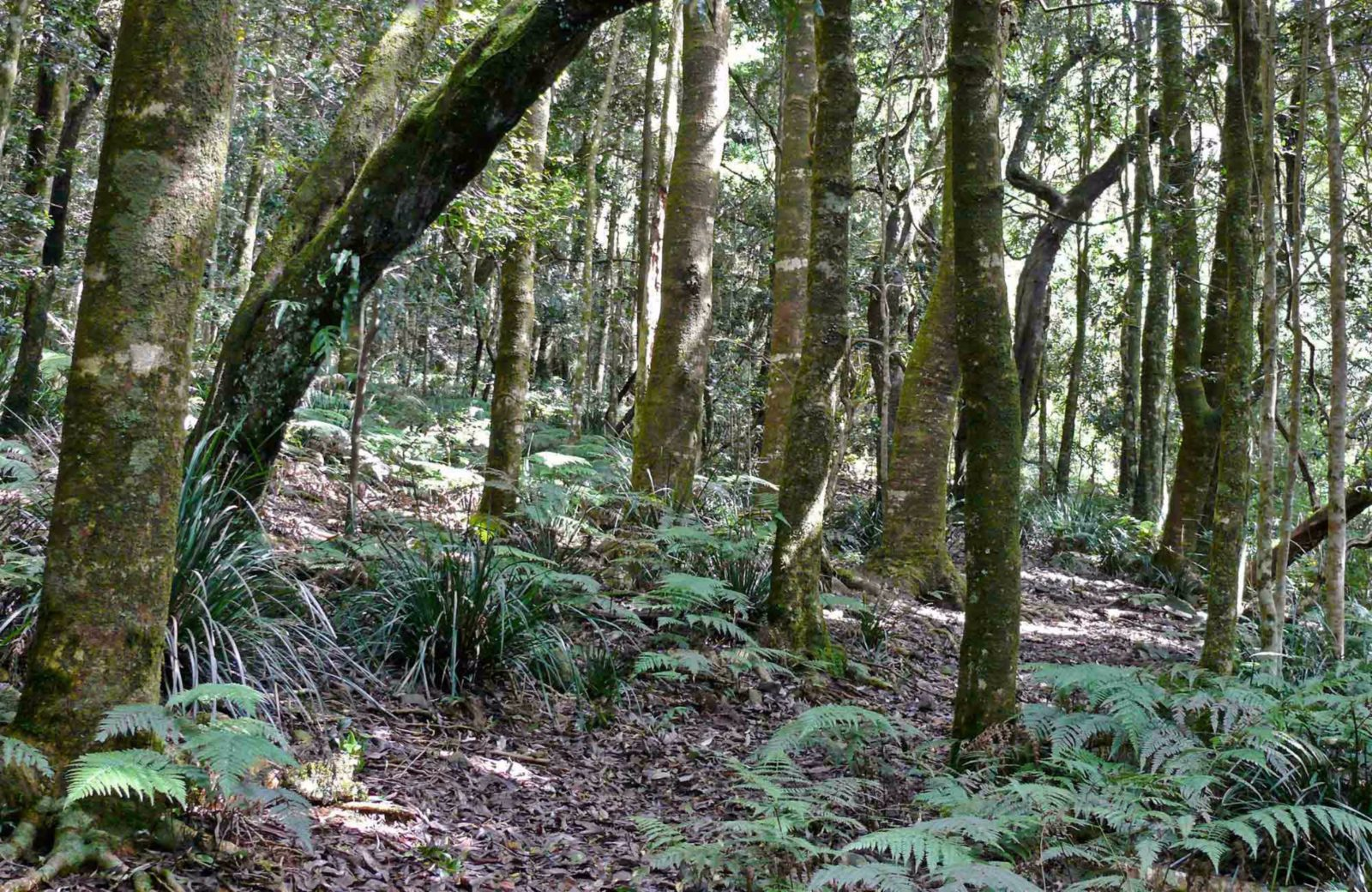 Summit walking track, Mount Hyland Nature Reserve. Photo: H Clark