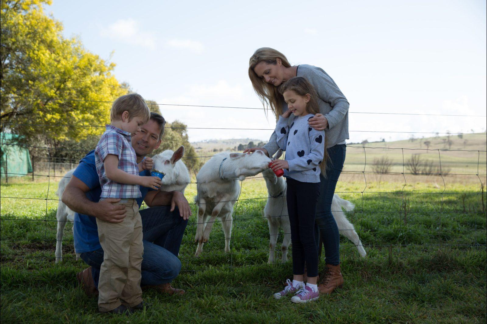 Sunhill Diary Goats