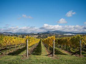 Swinging Bridge Vineyards