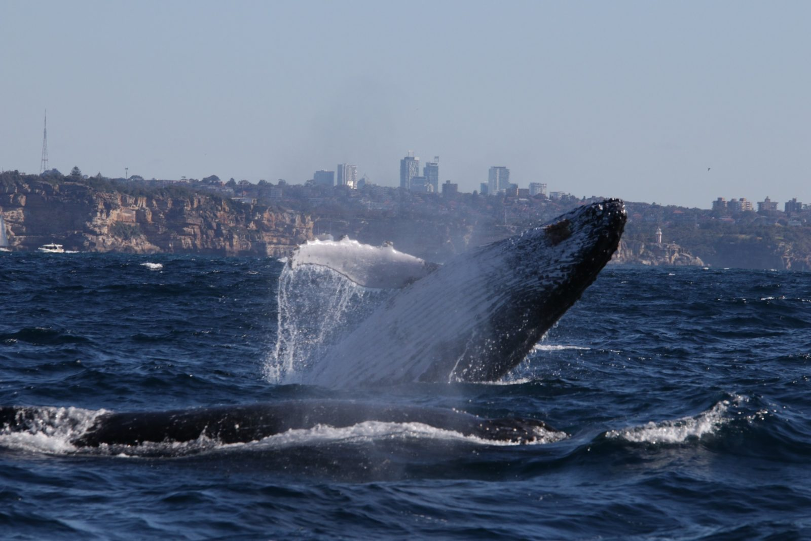 Eco Whale Watching