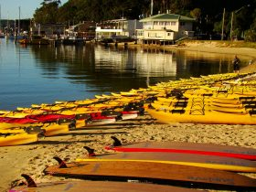 The rental fleet at Sydney Harbour Kayaks is amazing