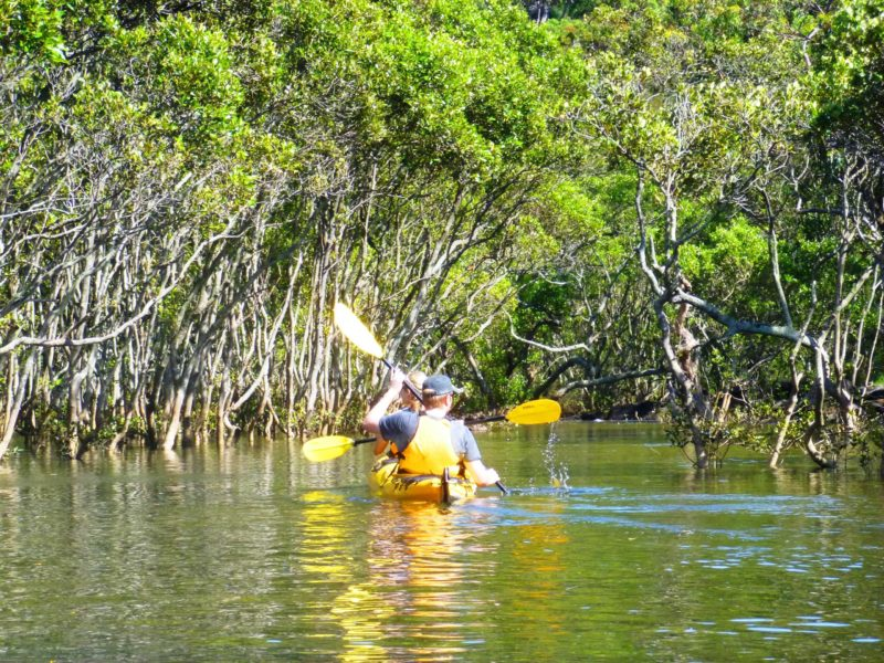 Kayak Eco Tours - visit places only kayaks can get you to