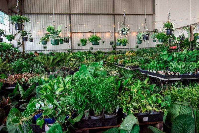 Sydney - Huge Indoor Plant Warehouse Sale - 70s Retro Party