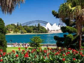 Sydney Private Day Tours, Sydney Botanic Gardens, Best place to view Opera House and Harbour Bridge