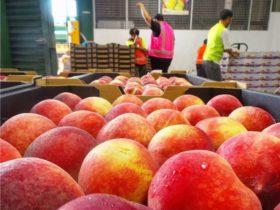 Sydney Produce Market