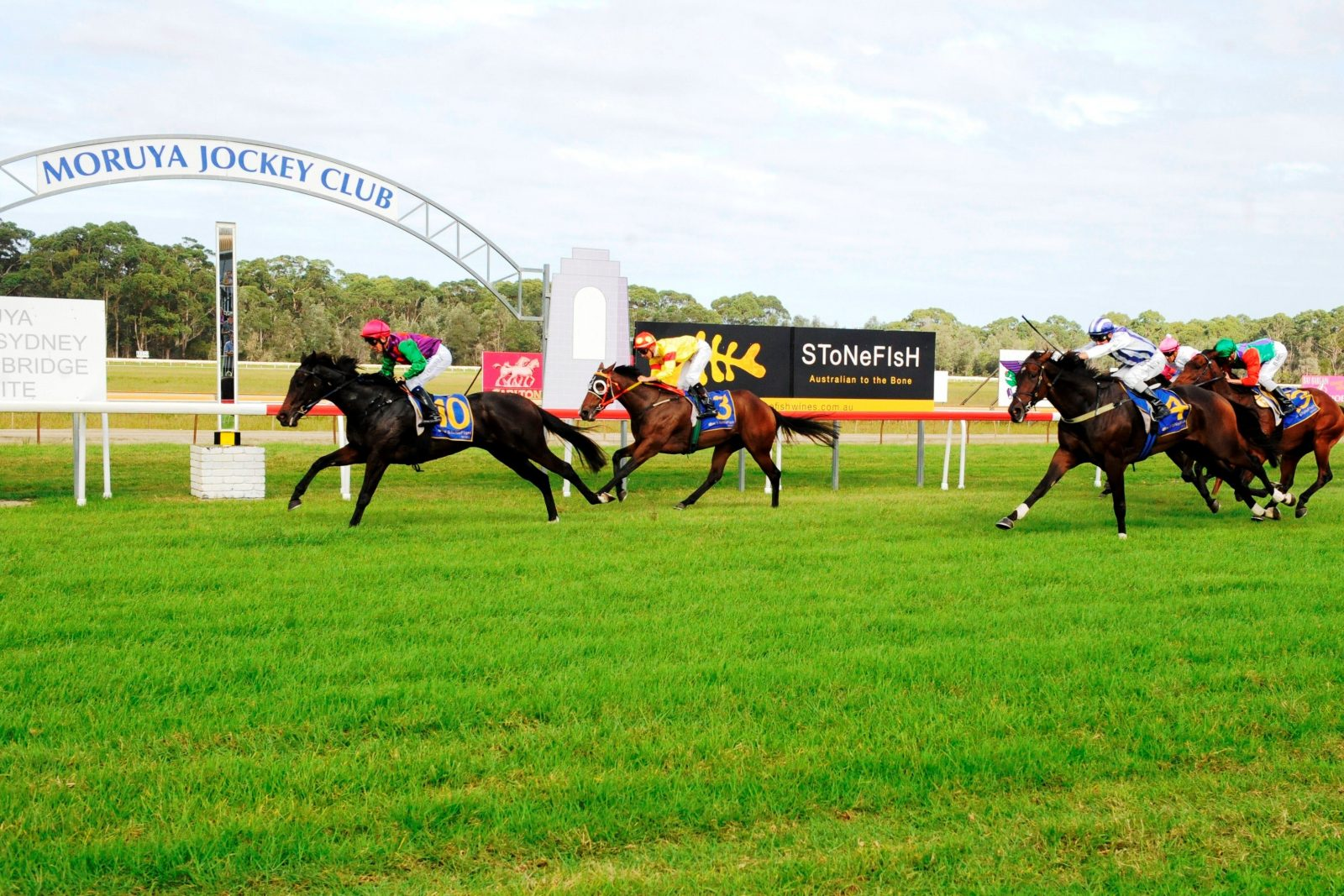 horses coming up to the finishing post at Moruya Race course