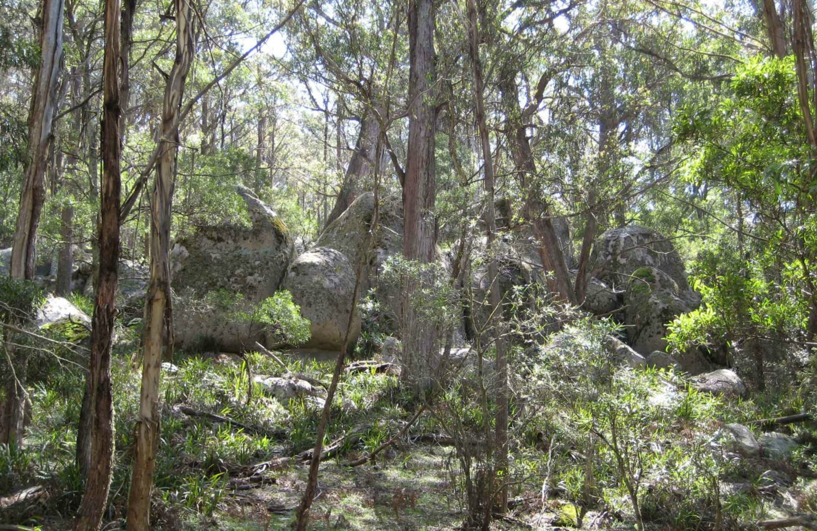 Tallaganda National Park. Photo: S Jackson/NSW Government