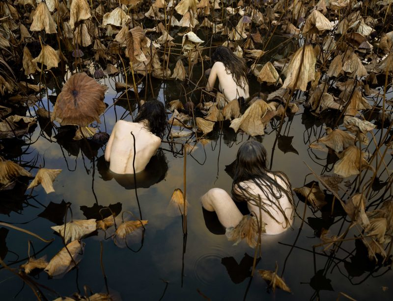 Tamara Dean 'Sacred Lotus (Nelumbo Nucifera) in Autumn