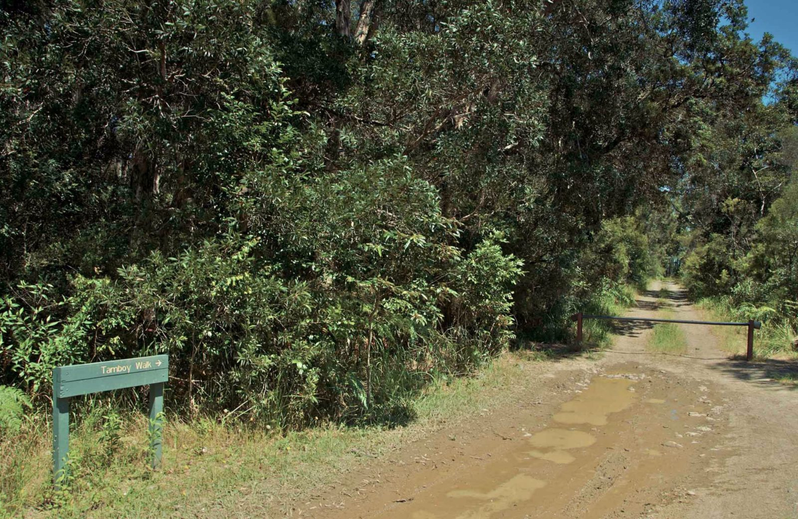 Tamboi walking track entrance, Myall Lakes National Park. Photo: John Spencer