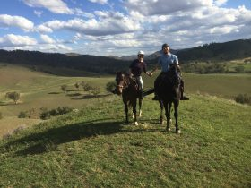 Tamworth & Kootingal horse riding adventures
