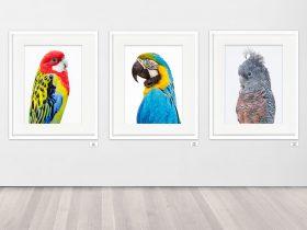 Tanya Stollznow Studio-Gallery