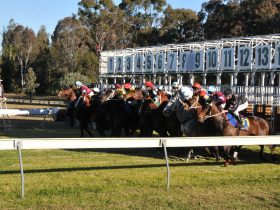 Taree Cup Weekend