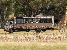 Savannah Safari at Taronga Western Plains Zoo