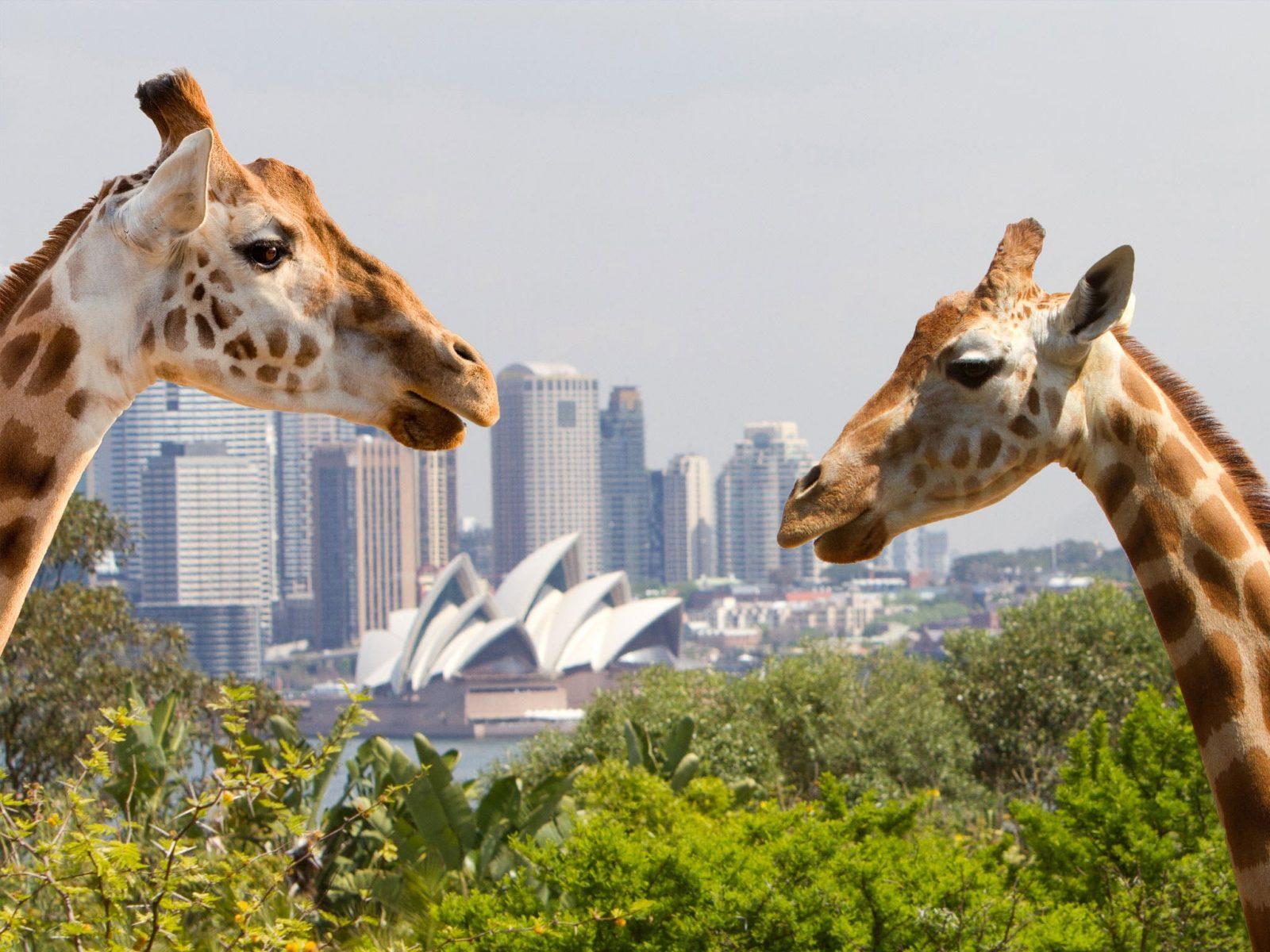 Taronga Zoo, My Fast Ferry, Discount Tickets