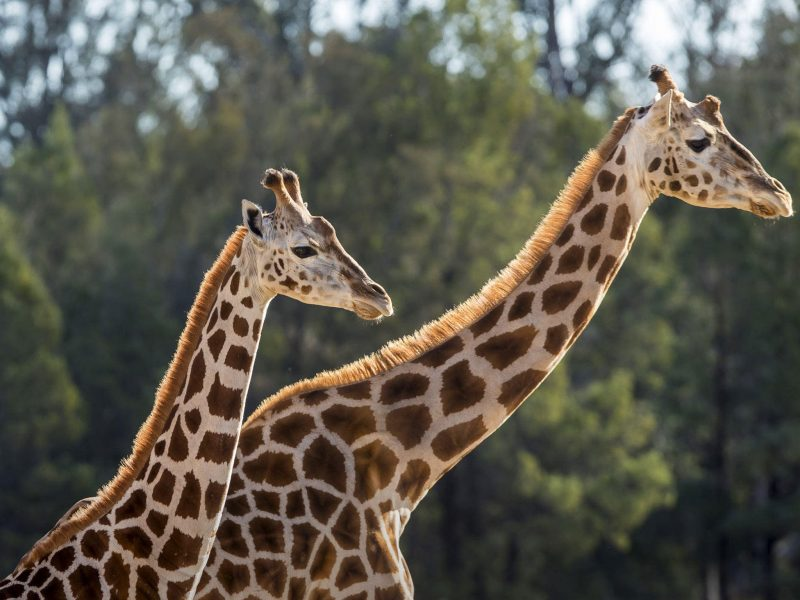 Taronga Zoo, My Fast Ferry, Discount Tickets, Sydney Harbour Cruise