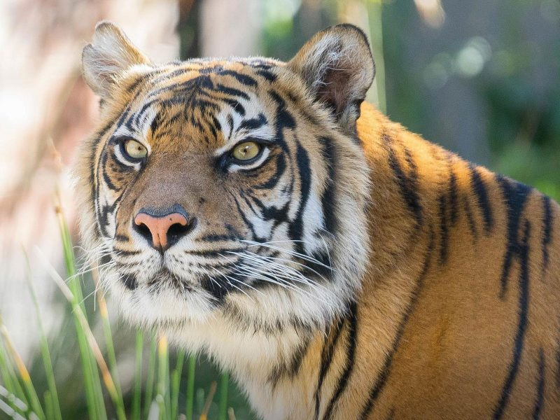 Taronga zoo, Discount Tickets, Ferry, Sydney Harbour Cruise