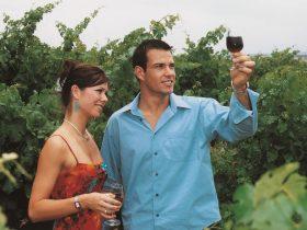 Wine tasting in Orange