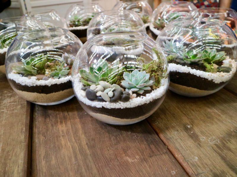 Fun terrarium workshop Sydney