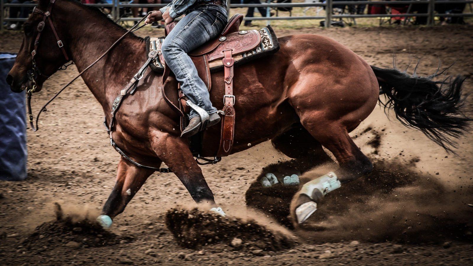 Wagga Pro Rodeo