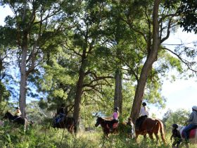 A group horse ride through the forest