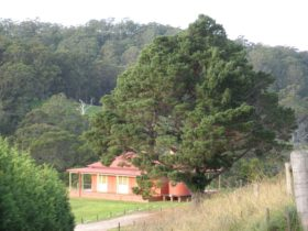 The Pines Pastoral