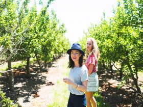 Two girls in a heritage apple orchard