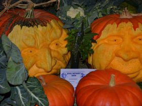 Being an Autumn Show, Pumpkins, Cabbages & Cauli's always feature strongly in our exhibits.