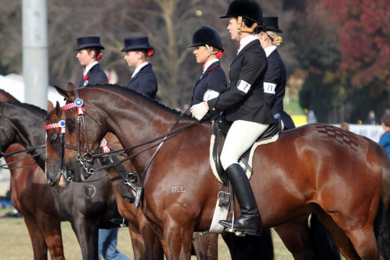 The Show is one of the largest regional Agricultural Horse Shows in NSW conducted over 5 days.