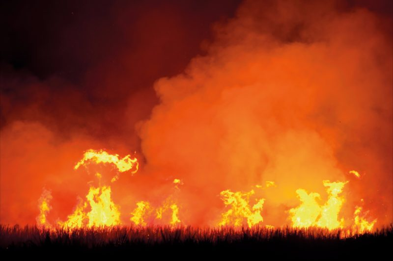 Cane fires - The Shed Gallery Goodwood Island