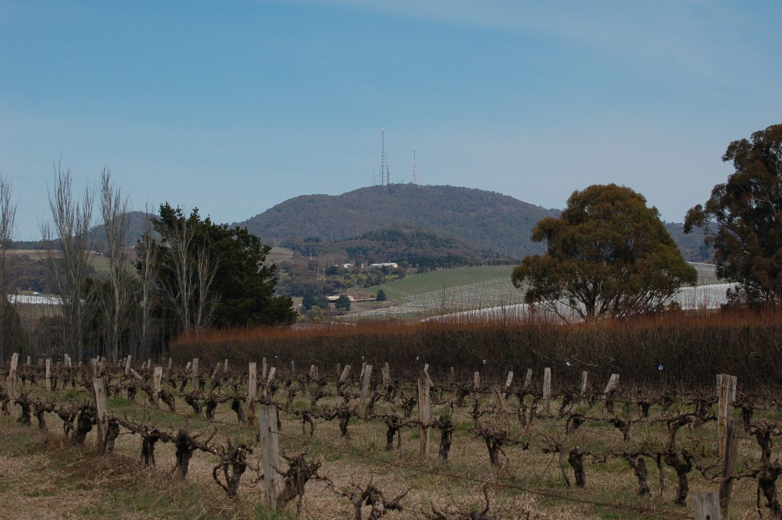 Thornbrook Orchard - set on the foothills of Mt Canobolas