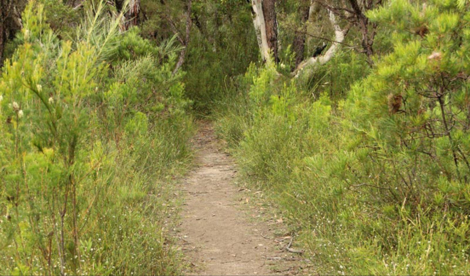 Three Views walking track