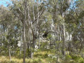 Thunderbolts lookout, Torrington State Conservation Area. Photo: NSW Government
