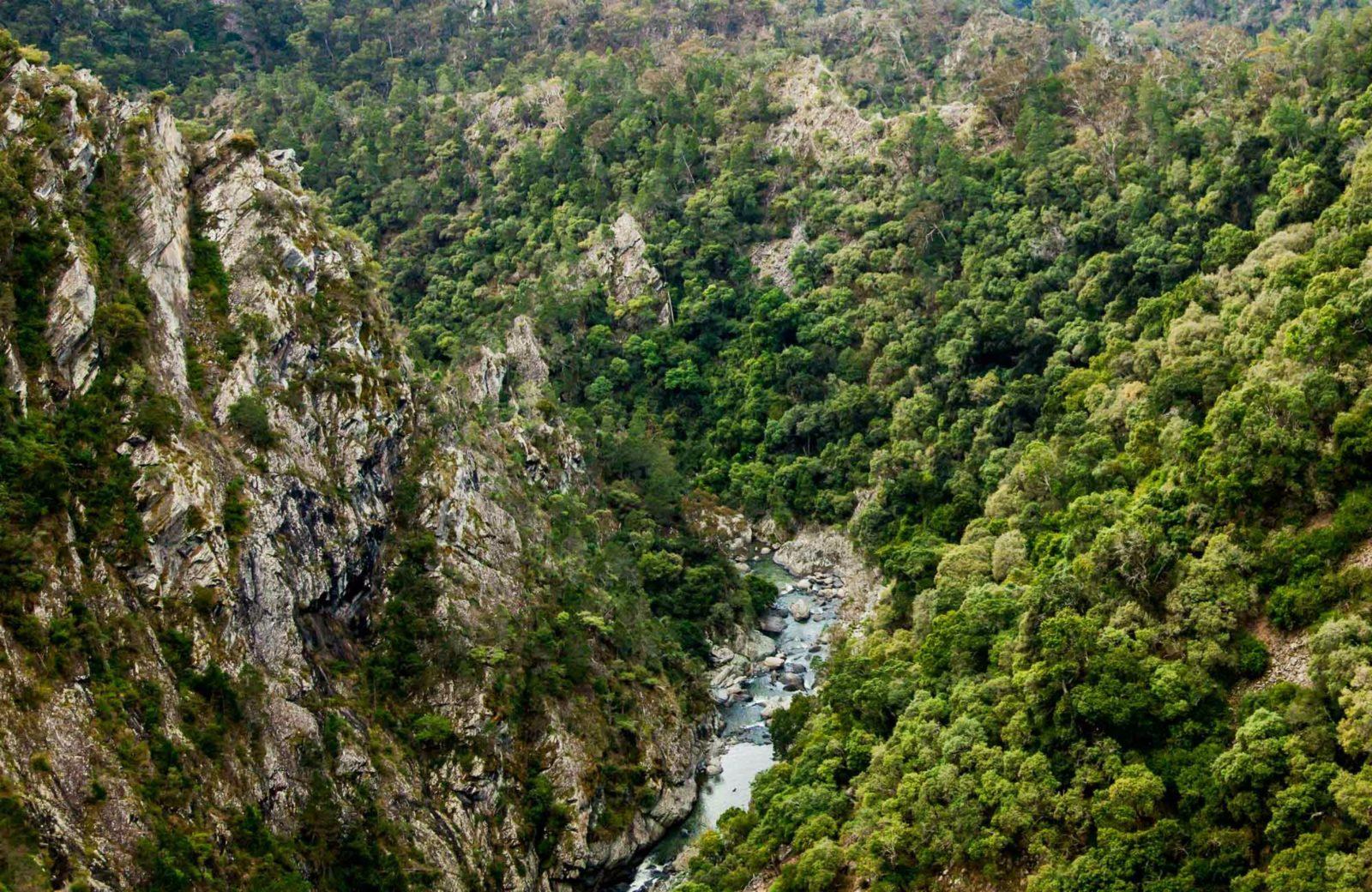 Tiara walking track, Tia Falls. Photo: Gerhard Koertner/NSW Government.