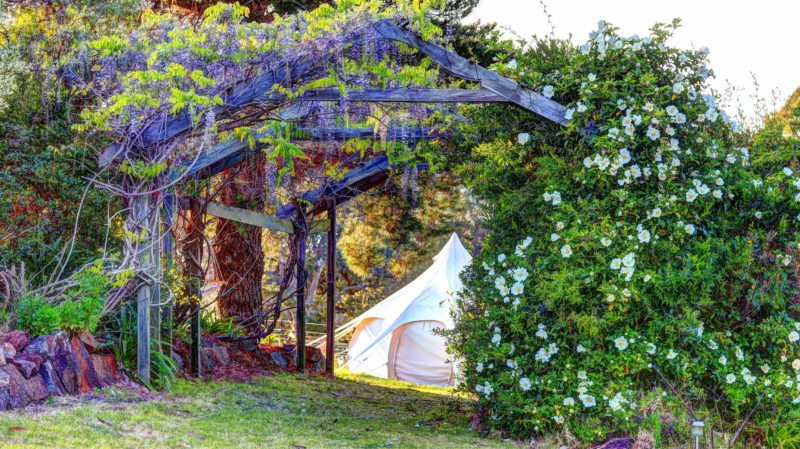 Discover your Lotus Belle Tent
