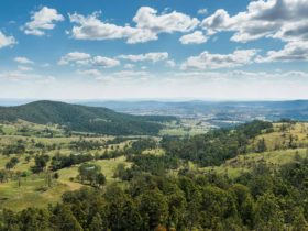 Tooloom lookout, Tooloom Nature reserve. Photo: David Young